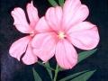 Al Borrego - Oleander