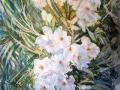 Vivian Monfort - White Oleander